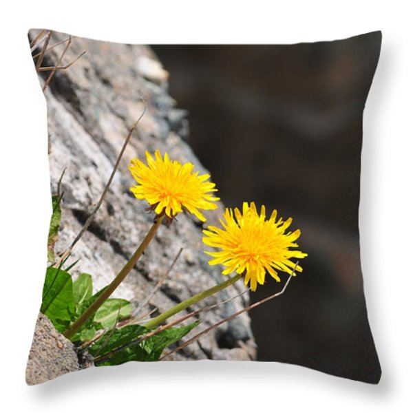 Dandelion Throw Pillow by Catherine Reusch  Daley