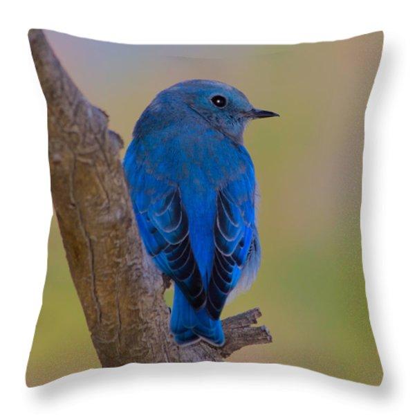 Deep Blue Throw Pillow by Shane Bechler
