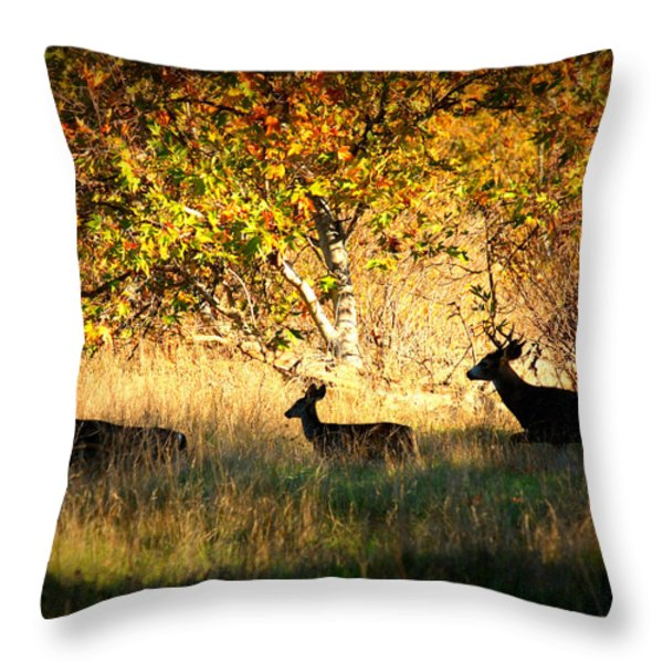 Deer Family in Sycamore Park Throw Pillow by Carol Groenen