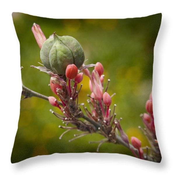 Desert Seed Pod 2 Throw Pillow by Kelley King