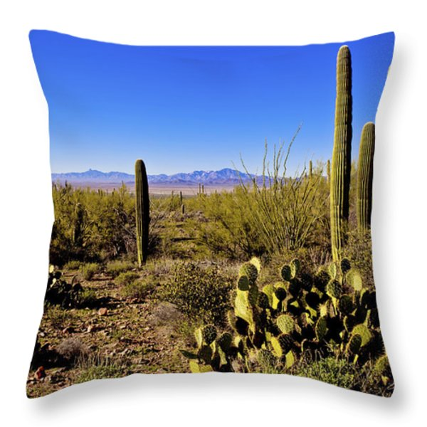 Desert Spring Throw Pillow by Chad Dutson
