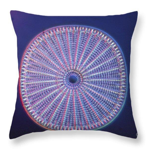Diatom - Arachnoidiscus Ehrenberi Throw Pillow by Eric V. Grave