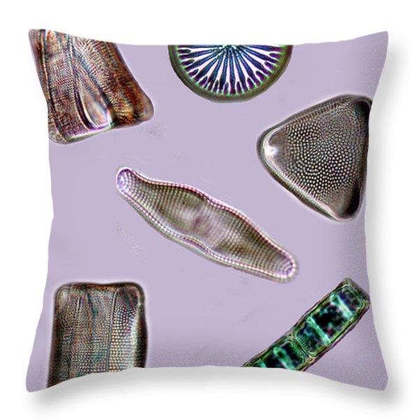Diatoms Throw Pillow by David Salter