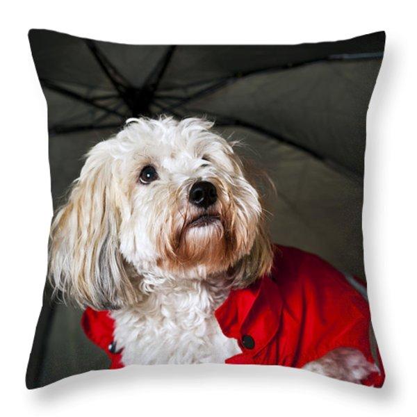 Dog under umbrella Throw Pillow by Elena Elisseeva