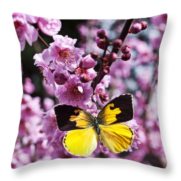 Dogface butterfly in plum tree Throw Pillow by Garry Gay