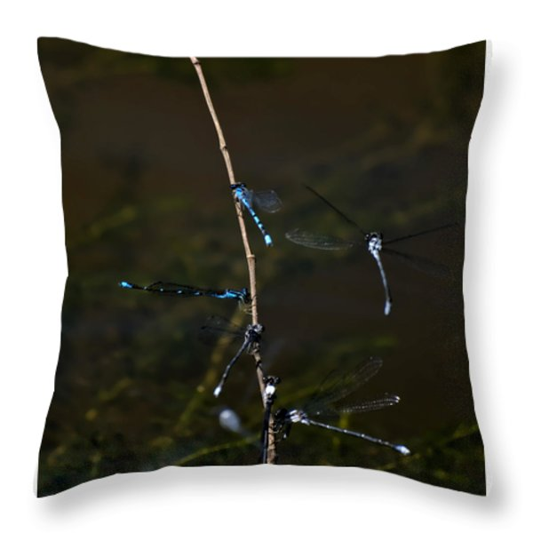 Dragonfly Hotel Throw Pillow by Warren M Gray