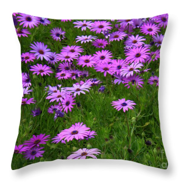 Dreaming Of Purple Daisies  Throw Pillow by Carol Groenen