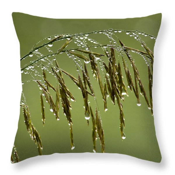 Drops Of Water On Grass Throw Pillow by Christina Rollo