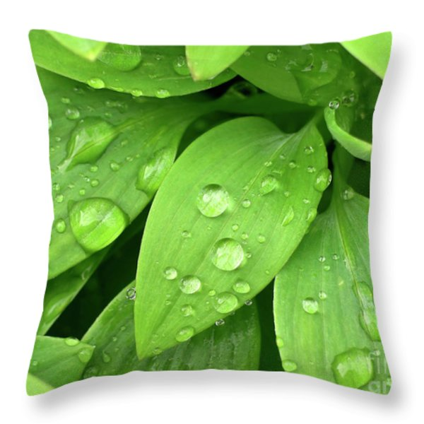 Drops On Leaves Throw Pillow by Carlos Caetano