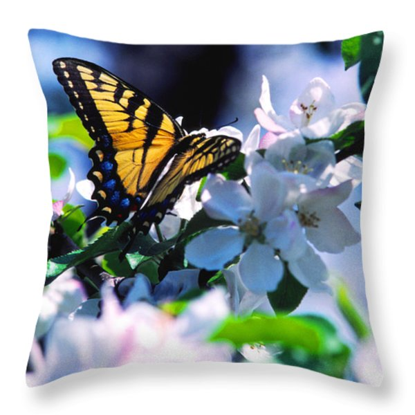 Eastern Tiger Swallowtail Throw Pillow by Thomas R Fletcher