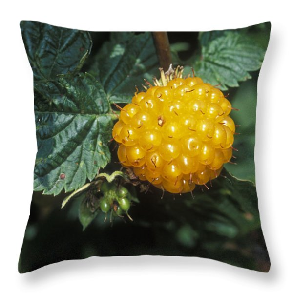 Edible Yellow Salmonberry Rubus Throw Pillow by Rich Reid