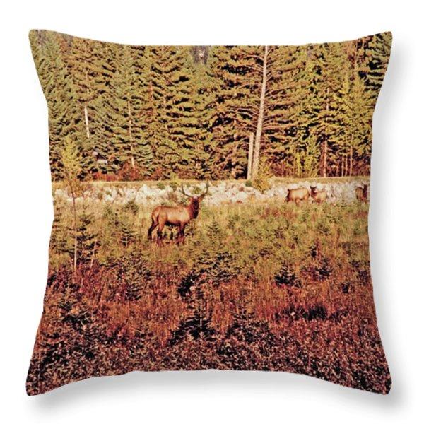 Elk Harem Throw Pillow by Al Bourassa