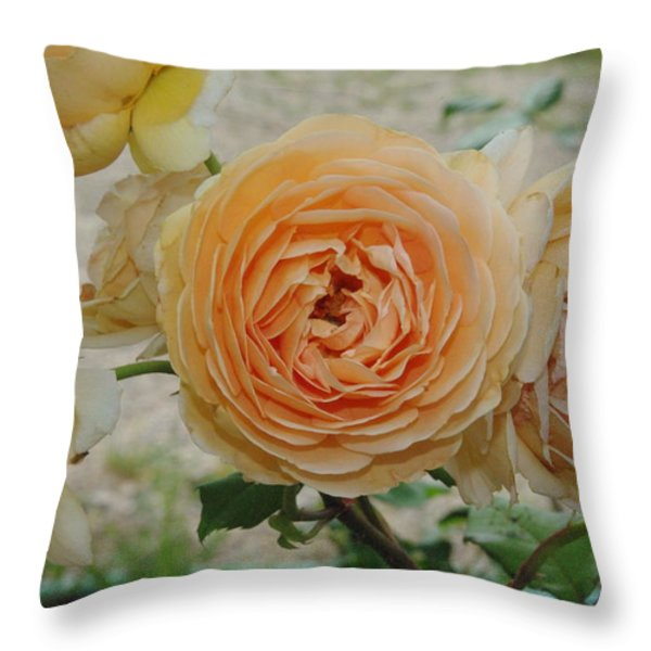 English Rose Apricot Crown Princess Margareta 2 Throw Pillow by Robyn Stacey