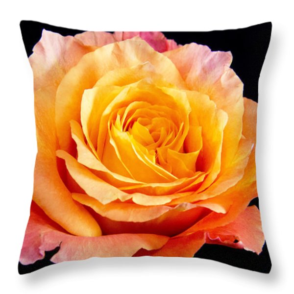 Enticing Beauty The Orange  Rose Throw Pillow by Daphne Sampson