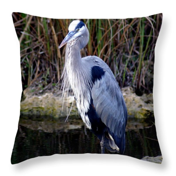 Everglades Heron Throw Pillow by Marty Koch