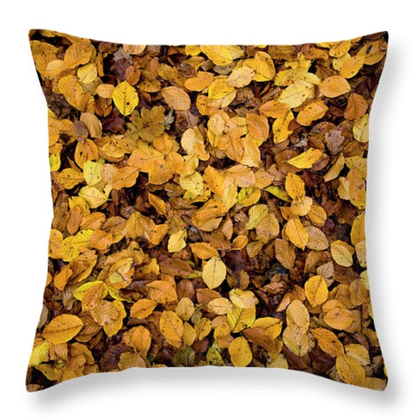 Throw Pillow featuring the photograph Fall Foliage Nature Pattern by Frank Tschakert