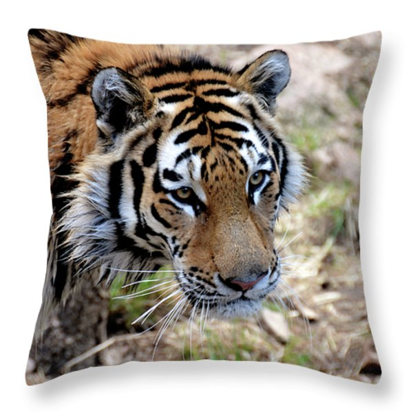 Feline Focus Throw Pillow by Angelina Vick