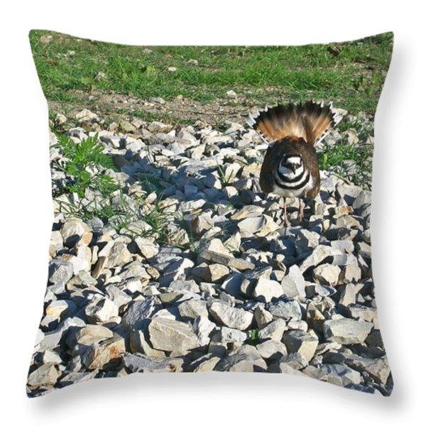 Female Killdeer Protecting Nest Throw Pillow by Douglas Barnett