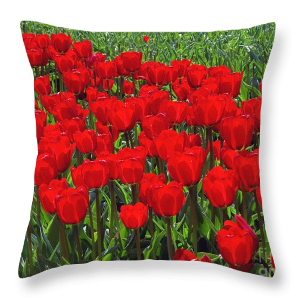 Field Of Red Tulips Throw Pillow by Sharon  Talson