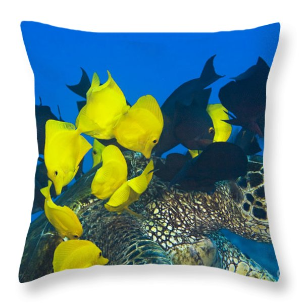 Fish cleaning turtle Throw Pillow by Dave Fleetham - Printscapes
