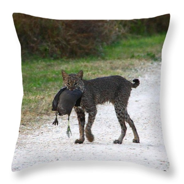 Florida Bobcat catches an evening snack Throw Pillow by Barbara Bowen
