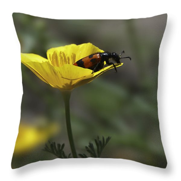 Flower And Bug Throw Pillow by Svetlana Sewell