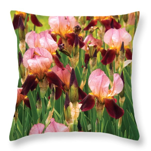 Flower - Iris - Gy Morrison Throw Pillow by Mike Savad