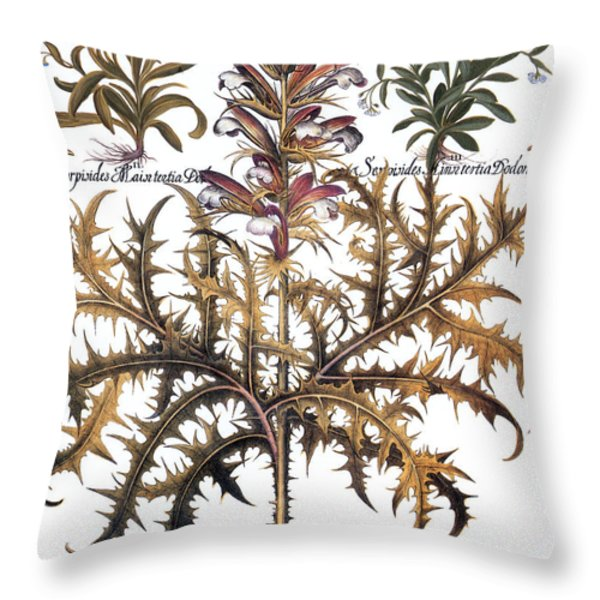 Forget-me-not & Acanthus Throw Pillow by Granger