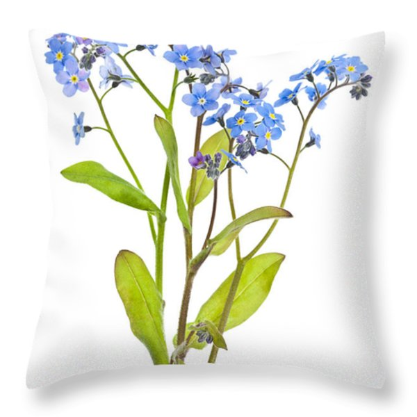 Forget-me-not Flowers On White Throw Pillow by Elena Elisseeva