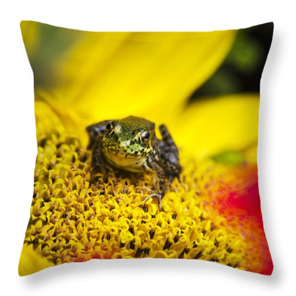 Funny Frog On A Sunflower Throw Pillow by Christina Rollo