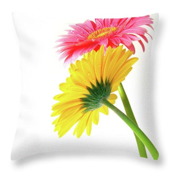 Gerber Flowers Throw Pillow by Carlos Caetano