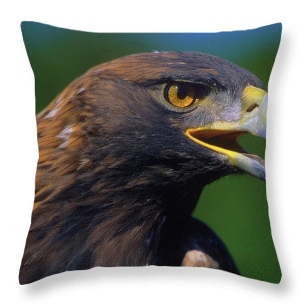 Golden Eagle Throw Pillow by Tony Beck