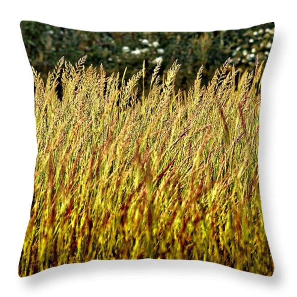 golden grasses Throw Pillow by Meirion Matthias