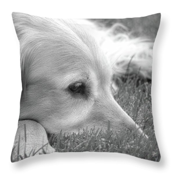 Golden Retriever Dog in the Cool Grass Monochrome Throw Pillow by Jennie Marie Schell