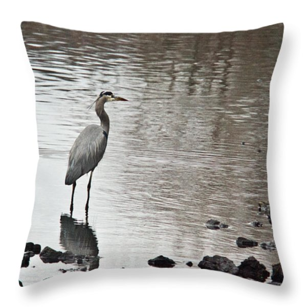Great Blue Heron Wading 2 Throw Pillow by Douglas Barnett