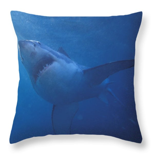 Great White Shark With Light Rays Throw Pillow by James Forte
