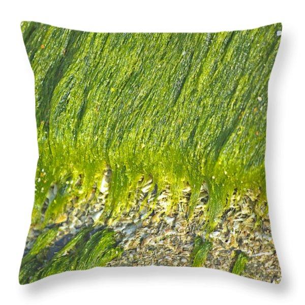 Green Algae On Rock Throw Pillow by Kenneth Albin