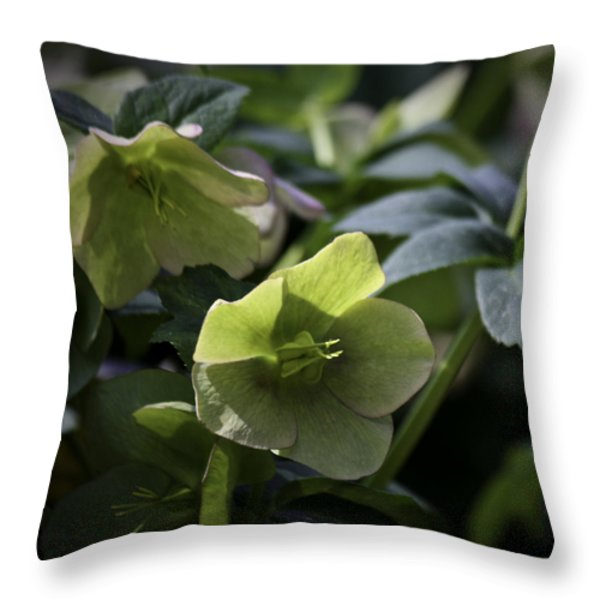 Green Hellebore Squared Throw Pillow by Teresa Mucha