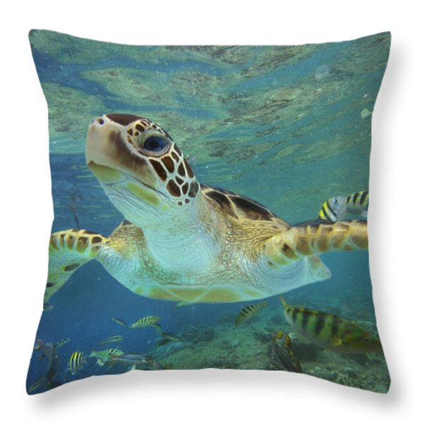 Green Sea Turtle Chelonia Mydas Throw Pillow by Tim Fitzharris