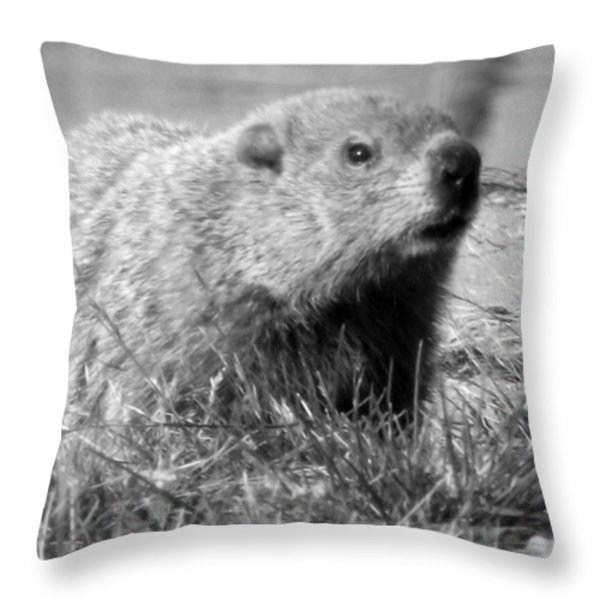 Groundhog Throw Pillow by Erika Kennedy