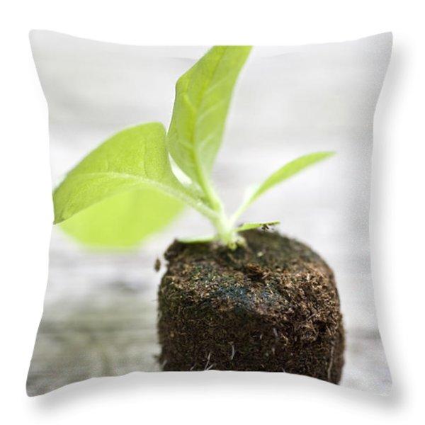 Growth Throw Pillow by Frank Tschakert