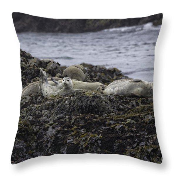 Harbor Seals Awake Throw Pillow by Tim Moore