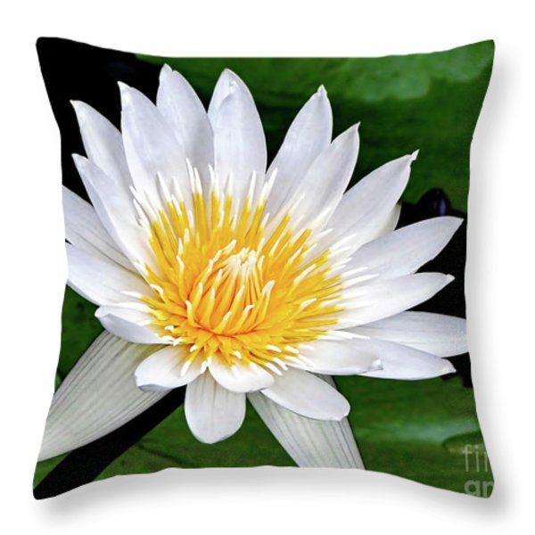 Hawaiian White Water Lily Throw Pillow by Sue Melvin