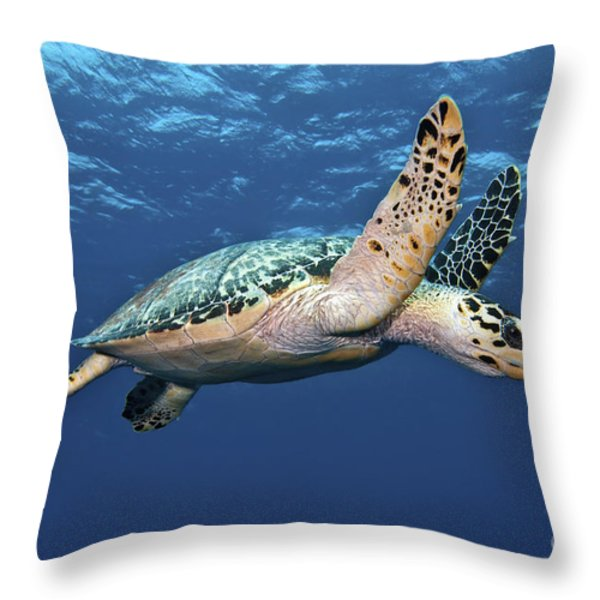 Hawksbill Sea Turtle In Mid-water Throw Pillow by Karen Doody