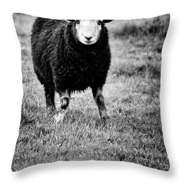 Herdwick Sheep Throw Pillow by Meirion Matthias