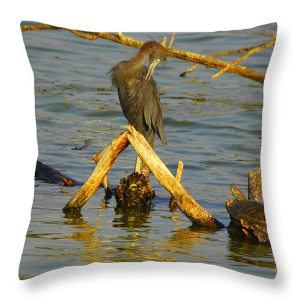 Heron And Turtle Throw Pillow by Robert Frederick