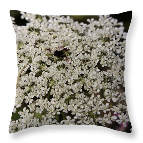 Hiding In The Lace Throw Pillow by Teresa Mucha