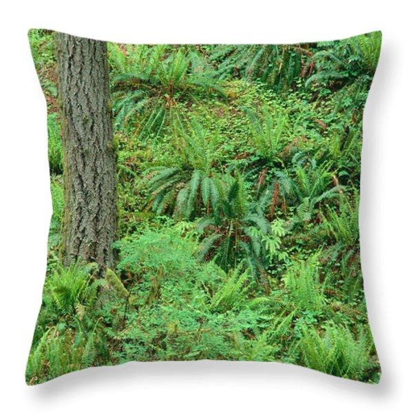 Hillside Ferns Throw Pillow by Greg Vaughn - Printscapes