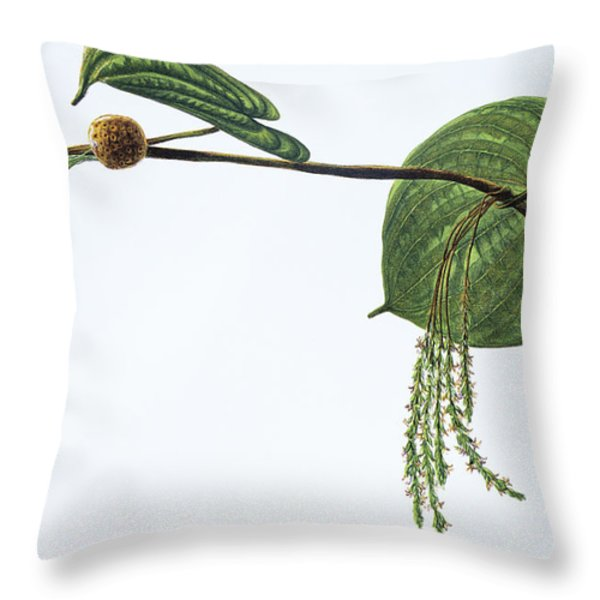 Hoi Throw Pillow by Hawaiian Legacy Archive - Printscapes