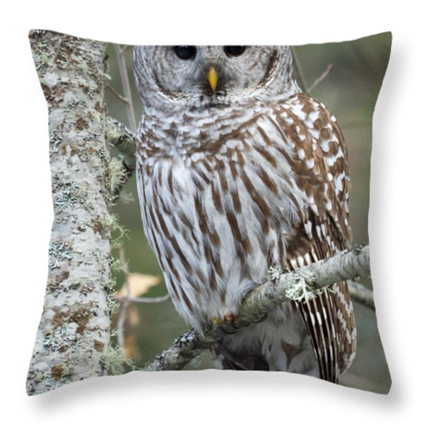 Hoot Hoot Hoot Are You Throw Pillow by Reflective Moment Photography And Digital Art Images